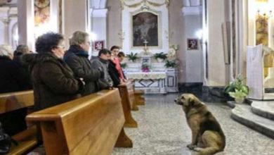 Photo of Câinele credincios merge zi de zi la BISERICA unde a fost înmormântată stăpâna lui