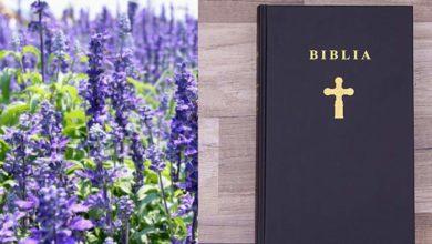 """Photo of """"IARBA SFÂNTĂ"""" din Biblie – ISOPUL. Plantă vindecătoare în multiple afecțiuni și ornamentală totodată"""